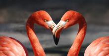 flamingo-600205_640.jpg